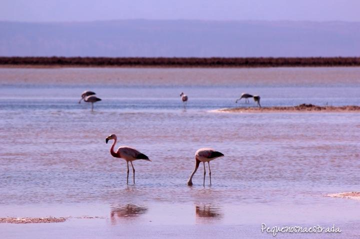 Laguna Chaxa.jpg